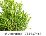 fresh thyme herb. fresh organic ... | Shutterstock . vector #788417464