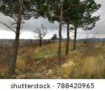 coastal landscape. rhythmic... | Shutterstock . vector #788420965