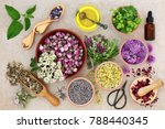 herbal medicine preparation... | Shutterstock . vector #788440345