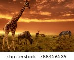 african sunset panoramic... | Shutterstock . vector #788456539