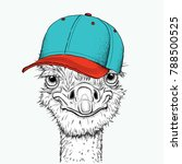 portrait of a ostrich in a hat. ... | Shutterstock .eps vector #788500525