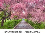 Park With Alley Of Blossoming...