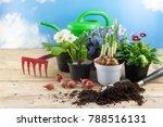 Spring Gardening  Flowers In...