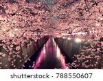 cherry blossoms at night in... | Shutterstock . vector #788550607