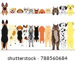 Stock vector standing dogs and cats front and back border set 788560684