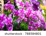 orchid flower in tropical... | Shutterstock . vector #788584801