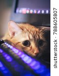 Stock photo ginger cat near the computer keyboard 788605807