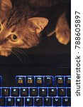 Stock photo ginger cat near the computer keyboard 788605897