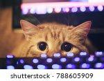 ginger cat near the computer...   Shutterstock . vector #788605909