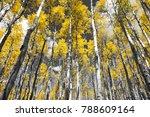 golden yellow forest of fall... | Shutterstock . vector #788609164
