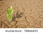 Green Plant Growing On The Dry...