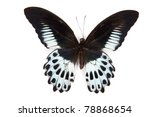 Stock photo black and blue butterfly papilio polymnestor isolated on white background 78868654