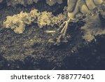 gardening  weeding weeds....   Shutterstock . vector #788777401