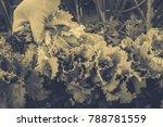 gardening  weeding weeds....   Shutterstock . vector #788781559