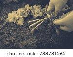 gardening  weeding weeds....   Shutterstock . vector #788781565