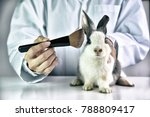 cosmetics test on rabbit animal ... | Shutterstock . vector #788809417