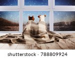 Stock photo dog and cat under a plaid looking out the window pets sitting with their backs 788809924