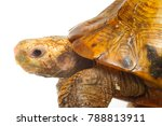 high resolution close up macro... | Shutterstock . vector #788813911
