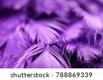 bird chickens feather texture... | Shutterstock . vector #788869339
