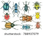 collection of beetles painted... | Shutterstock . vector #788937079