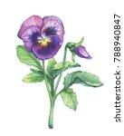 Illustration Of The Viola...