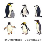 set of different penguins.... | Shutterstock .eps vector #788986114