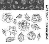 collection roses with line art... | Shutterstock .eps vector #789011695