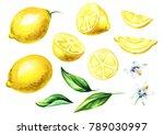 fresh lemon fruits and leaves... | Shutterstock . vector #789030997
