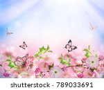 Stock photo flowers background with amazing spring sakura with butterflies flowers of cherries 789033691