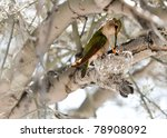 Hummingbird Feeding It's Young