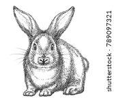 rabbit sketch. vector hand...   Shutterstock .eps vector #789097321