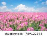 pink flower outdoor landscape... | Shutterstock . vector #789122995