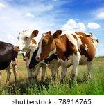 calves on the field | Shutterstock . vector #78916765