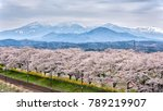 railroad track with a row of... | Shutterstock . vector #789219907