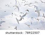 A Dense Flock Of Seagulls...