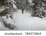 view of snow covered conifer... | Shutterstock . vector #789375865