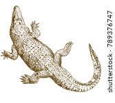 vector antique engraving... | Shutterstock .eps vector #789376747