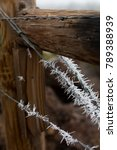 Hoar Frost Clings To A Barb...