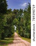 dirt rood through trees | Shutterstock . vector #789398719