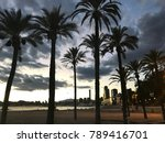 palm trees by the beachfront | Shutterstock . vector #789416701