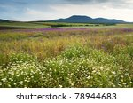 Spring Scenery With Wild...