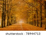 Beautiful Autumn Lane In The...