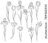 vector drawing flowers of...   Shutterstock .eps vector #789560554