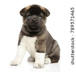 american akita dog puppy sits... | Shutterstock . vector #789571465