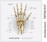 hand bone with detail vector... | Shutterstock .eps vector #789582547