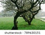 hue  vietnam   10th december... | Shutterstock . vector #789630151