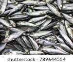 Fresh Mackerel Fish In Market ...