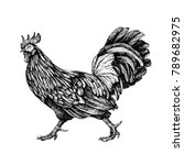rooster. cock illustration in... | Shutterstock .eps vector #789682975