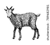 goat sketch style. hand drawn... | Shutterstock .eps vector #789682981