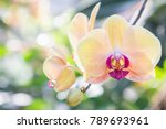 Orchid Flower In Garden At...